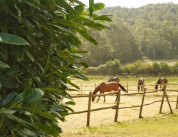 The Best Agriturismi in Lazio: Authentic Farm-Stays near Rome, Italy